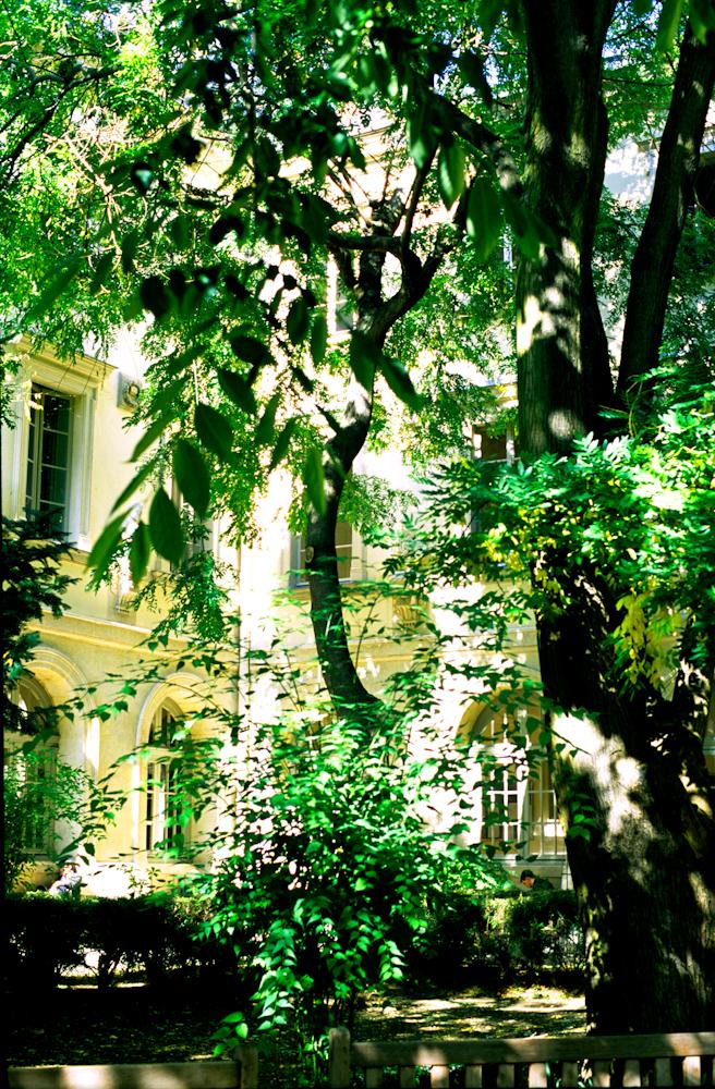 Forest1b.jpg