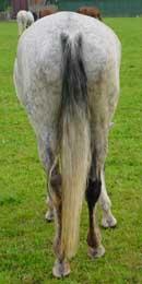 606 - Paard