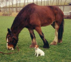 535 - Paard