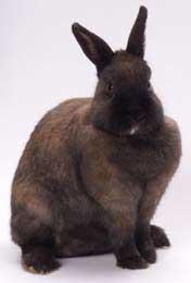000-5-konijnen.jpg