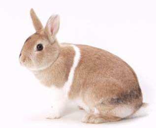 000-3-konijnen.jpg