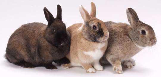 000-1-konijnen.jpg