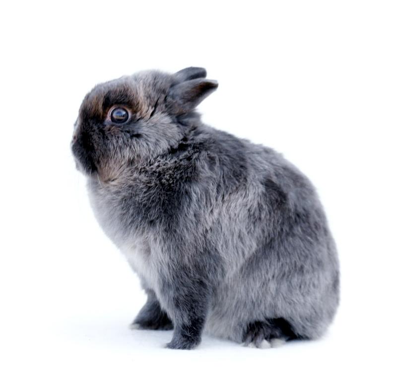 2009 - Grijs konijn