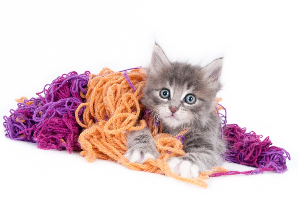Grey kitten playing with coloured wool  (1 of 1).jpg