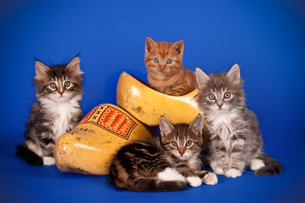 Four kittens with Dutch cloggs (1 of 1).jpg