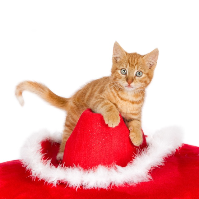 Ginger kitten on top of a Christmas hat (1 of_1).jpg