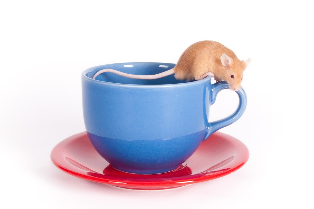 Mouse on cup and saucer (1 of 1).jpg