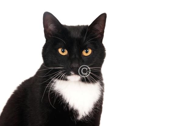 Zwart witte kat portret (1 of 1)-imp.jpg