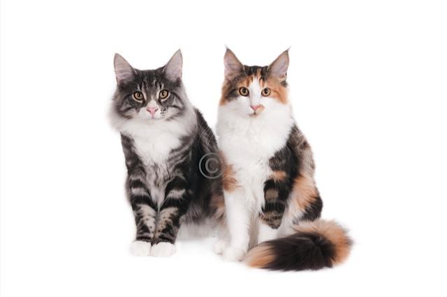 kat-11093-Toby en Nina