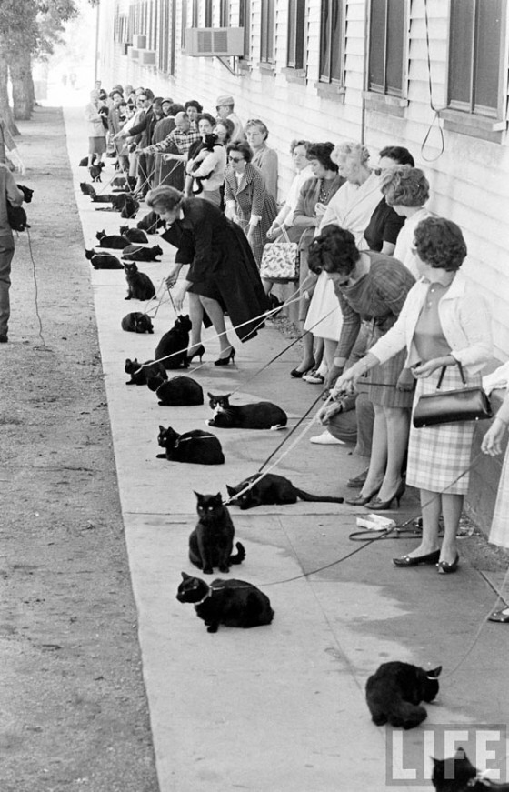 black-cat-auditions-hollywood-1961-2-560x871.jpg