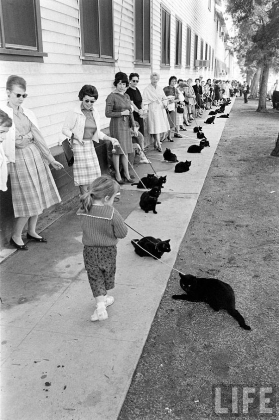 black-cat-auditions-hollywood-1961-4-560x842.jpg