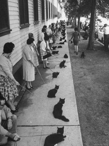 ralph-crane-owners-with-their-black-cats-waiting-in-line-for-audition-in-movie-tales-of-terror.jpg