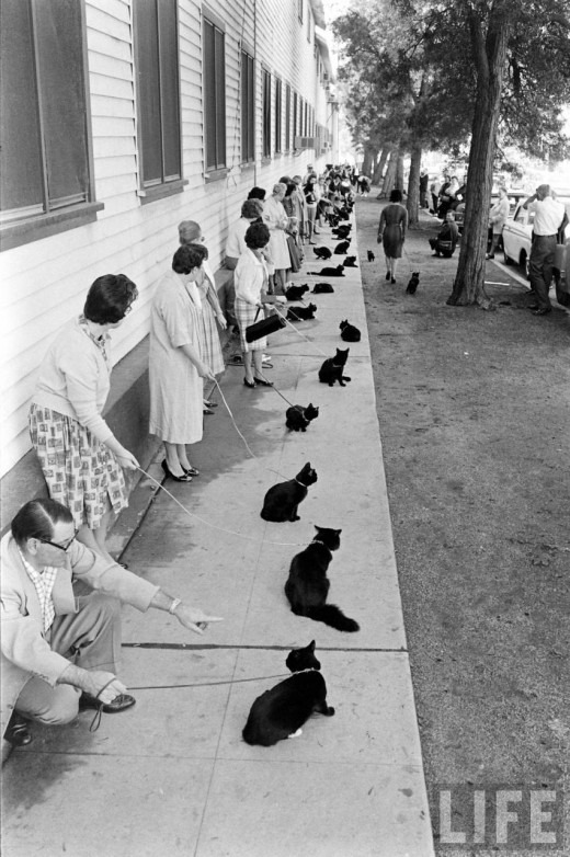 black-cat-audition-03.jpg