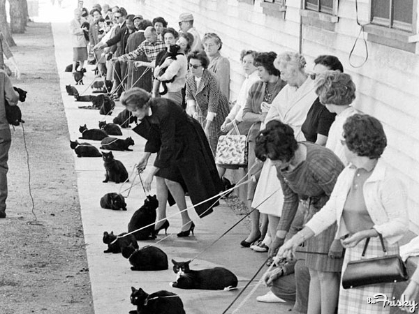 Black-Cat-Auditions-1961-600x450.jpg