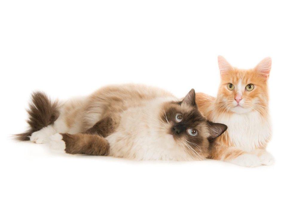 katten-11213-Iggy en Yoshi
