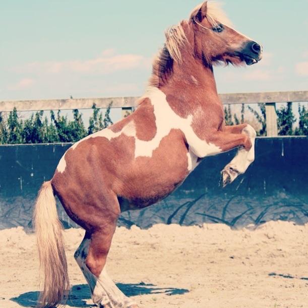 pony-11252