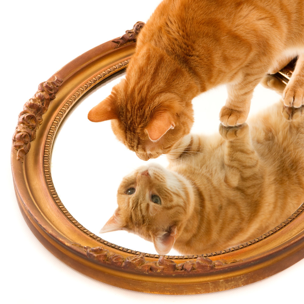 Ginger cat looking at his reflection in an old golden mirror-1.jpg