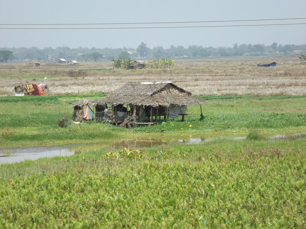 Hut in the rice fields