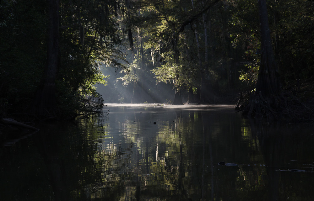 louisiana bayou sunrise