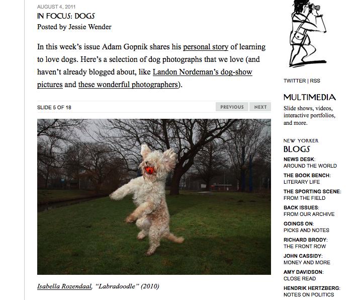 new yorker blog