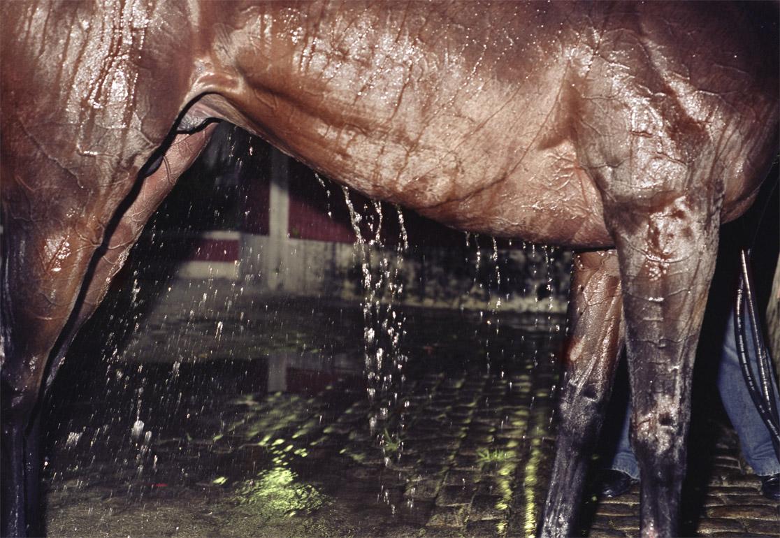 portfolio 56 wet horse