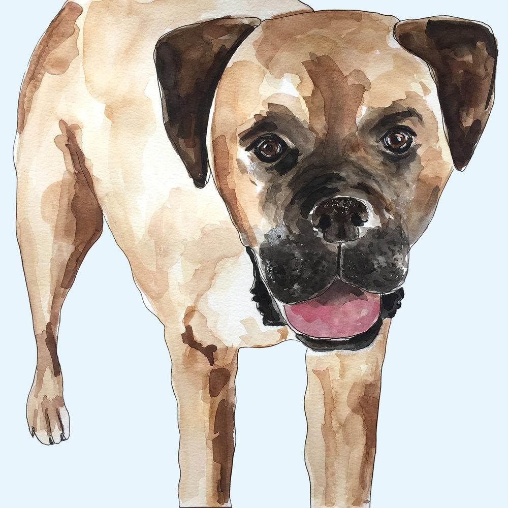 bulldog_2017.jpg