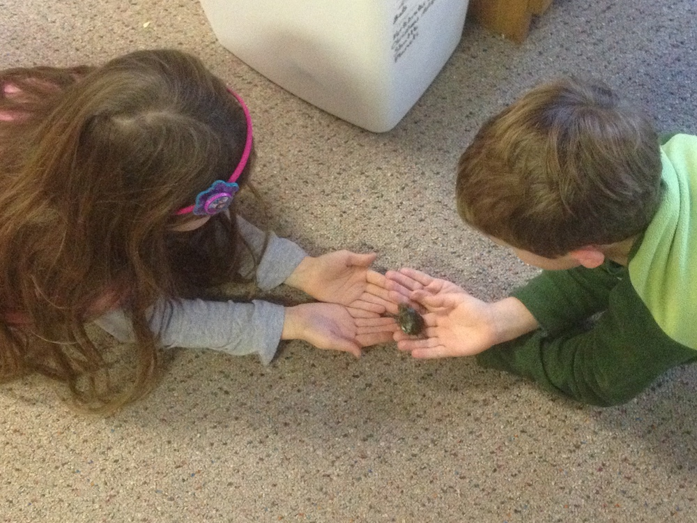 Students play with the After School Pet turtle, Squirt.