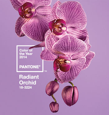 Pantone_orchid.jpg