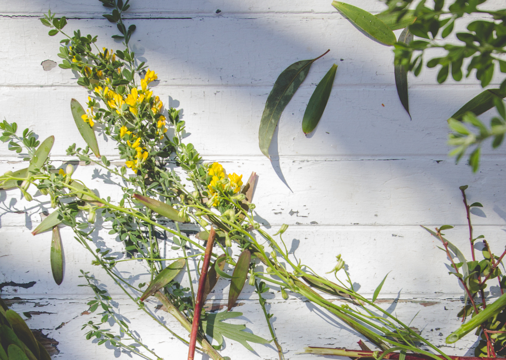 140401-flowersweeds041.jpg