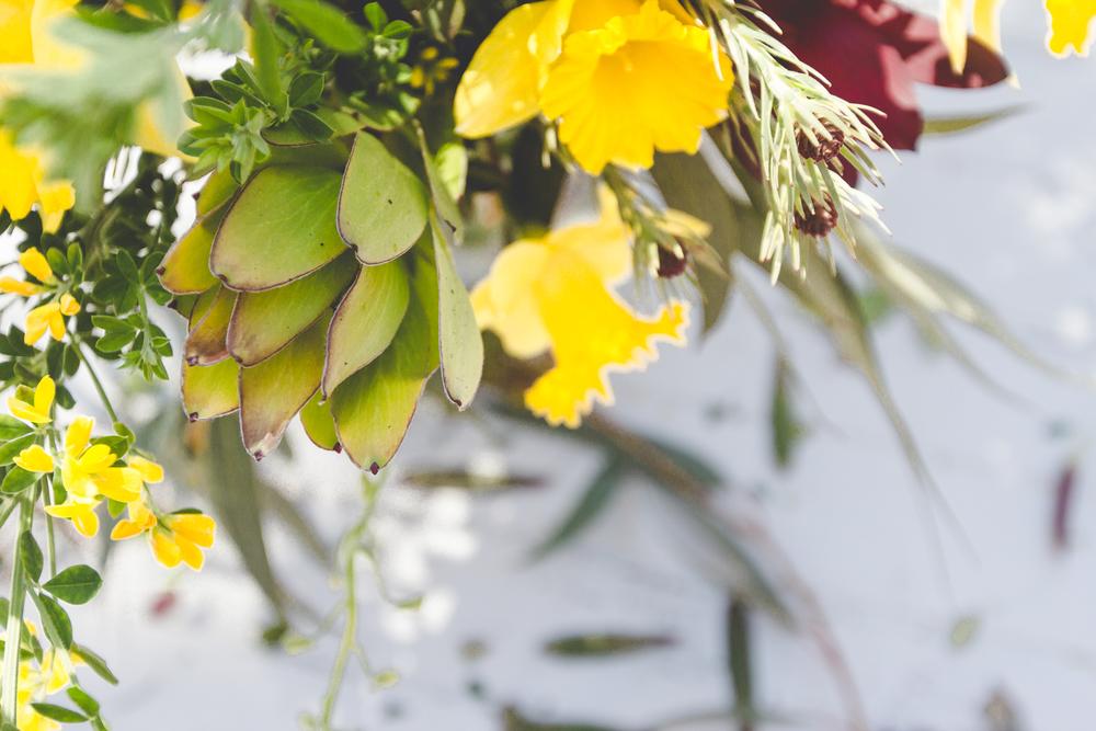 140401-flowersweeds049.jpg
