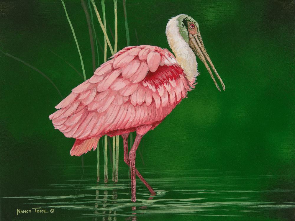 Roseate Wader,Roseate Spoonbill, spoonbill, pink bird, art, herons, Nancy Tome