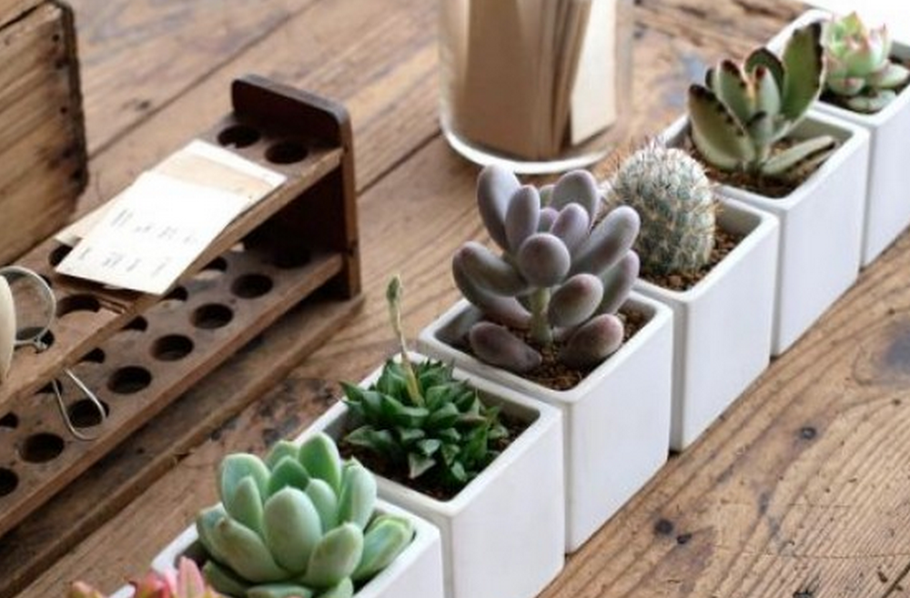 Photo Source:   http://www.architectlines.com/green-design-ideas-cacti-and-other-succulents/