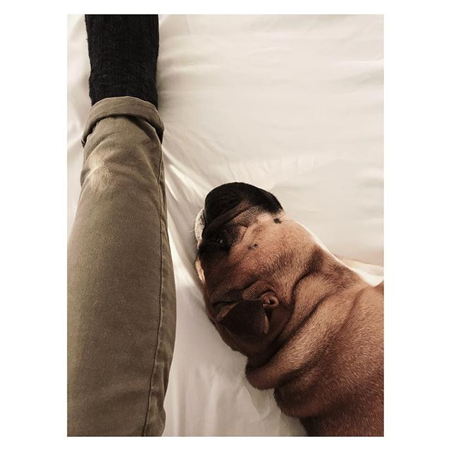 | THOSE LIPS | #dog #mansbestfriend #bulldog #englishbulldog #london #england #dogsofinstgram #eyes #instagood #love #albums #records #yellow #sleep #puppies #partner #leica #sleepy #workout #snore #design #interiordesign #atl #atlanta #atlantadogs #englishbulldogsofinstagram