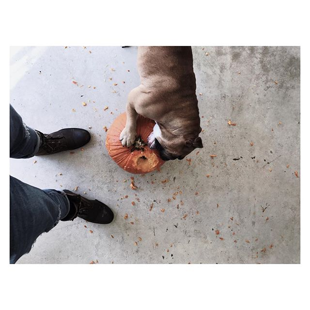 | PUP-KIN | #pumpkin #dog #pumpkinpatch #atl #atlanta #englishbulldog #dogsofinstagram #instagood #love #art #atlartist #design #face #pumpkincarving #pumpkinlatte #allsaints #bulldogsofinstagram #englishbulldogsofinstagram #mansbestfriend #lick #jackolantern