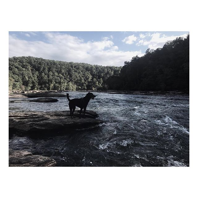 | CALM | @risingredlotus #chillday #hike #georgia #hills #trees #woods #nature #dogs #dog #mansbestfriend #swimmer #love #relax #blessed #greatthings #instagood #instadog #awesome #fresco