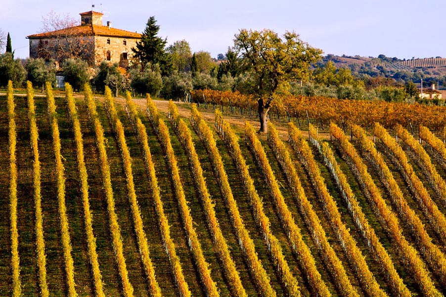 tuscany-vineyard.jpg