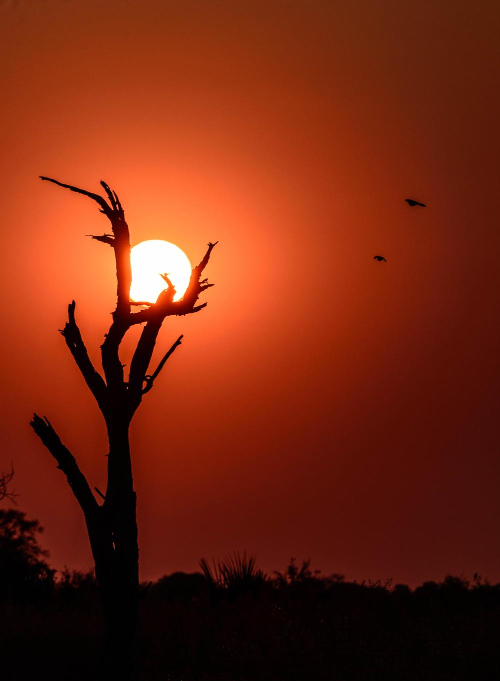 Okavango sunrise-2.jpg