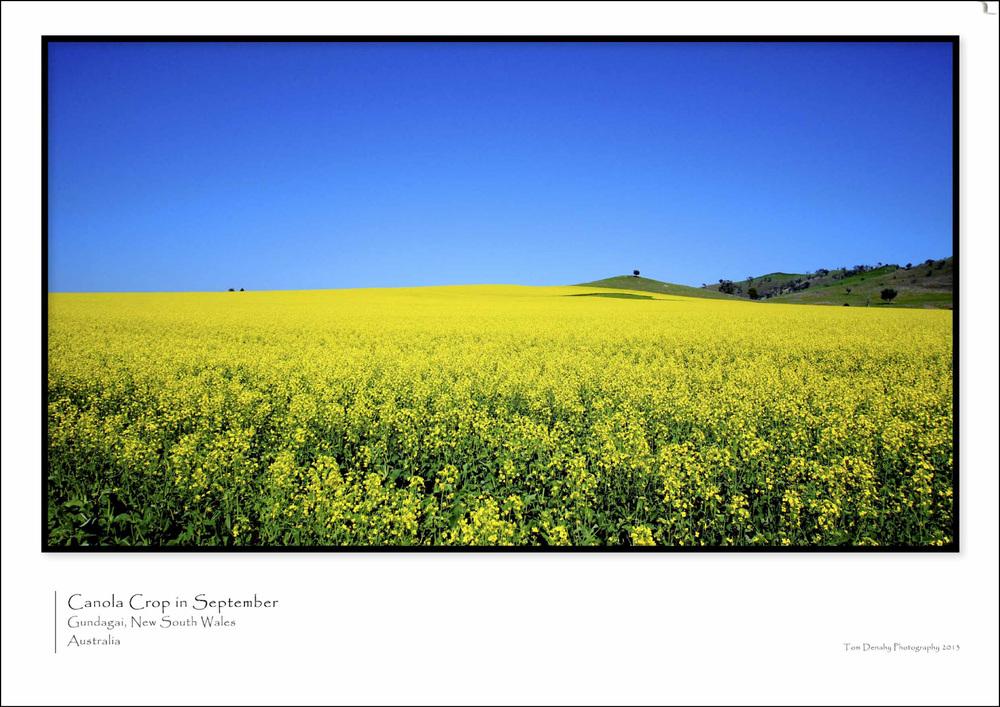 Canola Crop CODE:TD051013005