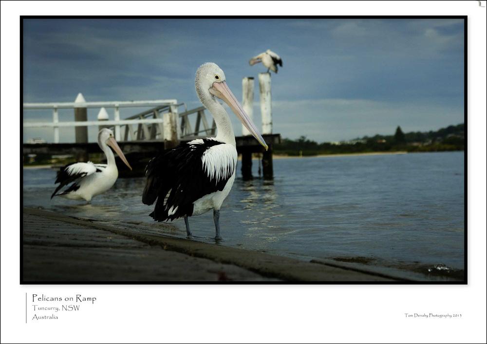 Pelicans CODE:TD051013010