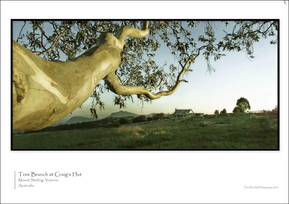 Tree Branch CODE:TD051013017