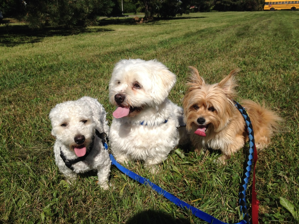 """BEST DOG WALKER EVER! I am so impressed with Emma- not only is she amazing with my three pups, she is very professional and trustworthy. One of my pups is a very reluctant walker- as in, he sits on the doorstep and doesn't move- in two days Emma was able to get him happily walking with his brother and sister. Emma is a real gem and her work is so important to me. I feel much better leaving the house in the morning knowing that she will be there in a few hours to take care of my four-legged children...invaluable peace of mind. I met about a dozen dog walkers before hiring Emma because she was the only one that took the job seriously. I was also impressed with the humility she expressed knowing that she was being trusted not only my precious pups, but also my home. What a great find!""-Brenda M."