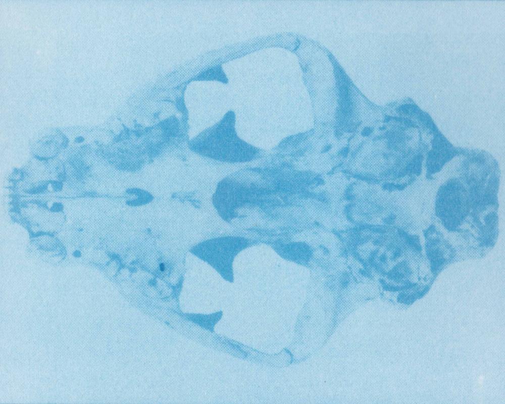 Skull Web 2.jpg