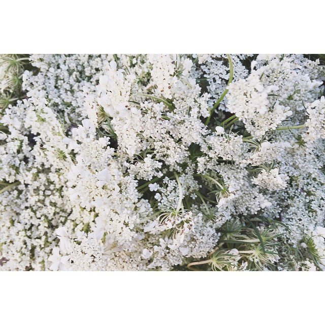 Queen Anne's Lace #corktown #brushpark #detroit #summer #wildflowers #liveauthentic #thatsdarling #mytinyatlas