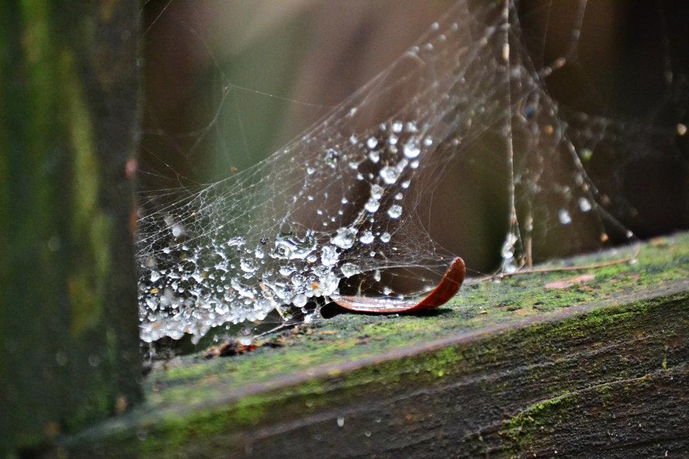 wet web 3.jpg