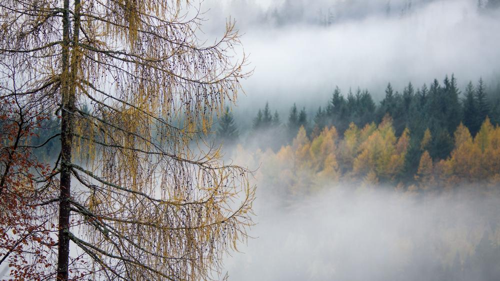 strathyretree1500.jpg