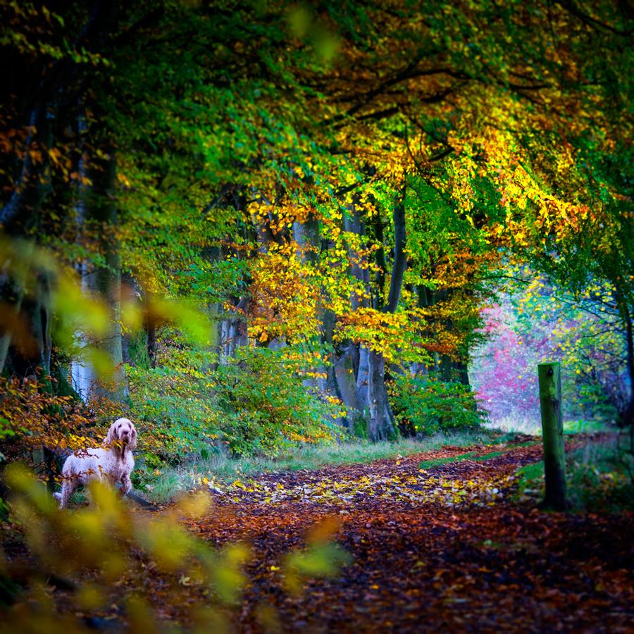 Autumndog2.jpg