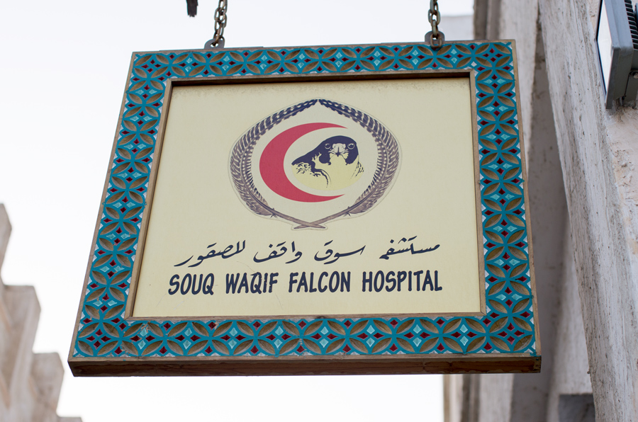 ... Of course, a falcon clinic!!