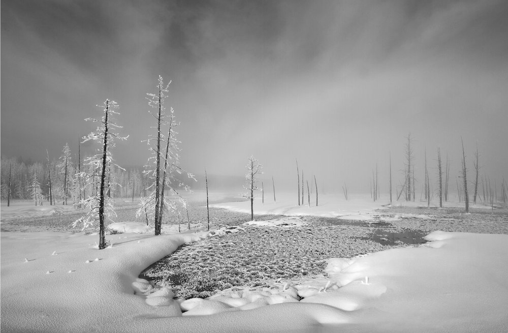 "The Al Thani Award for Photography 2013 Robert Fulton Scotland ""Winter Trees"""