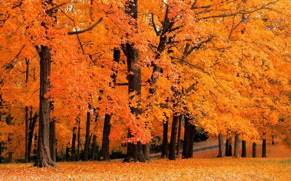 fall no. 2.jpg