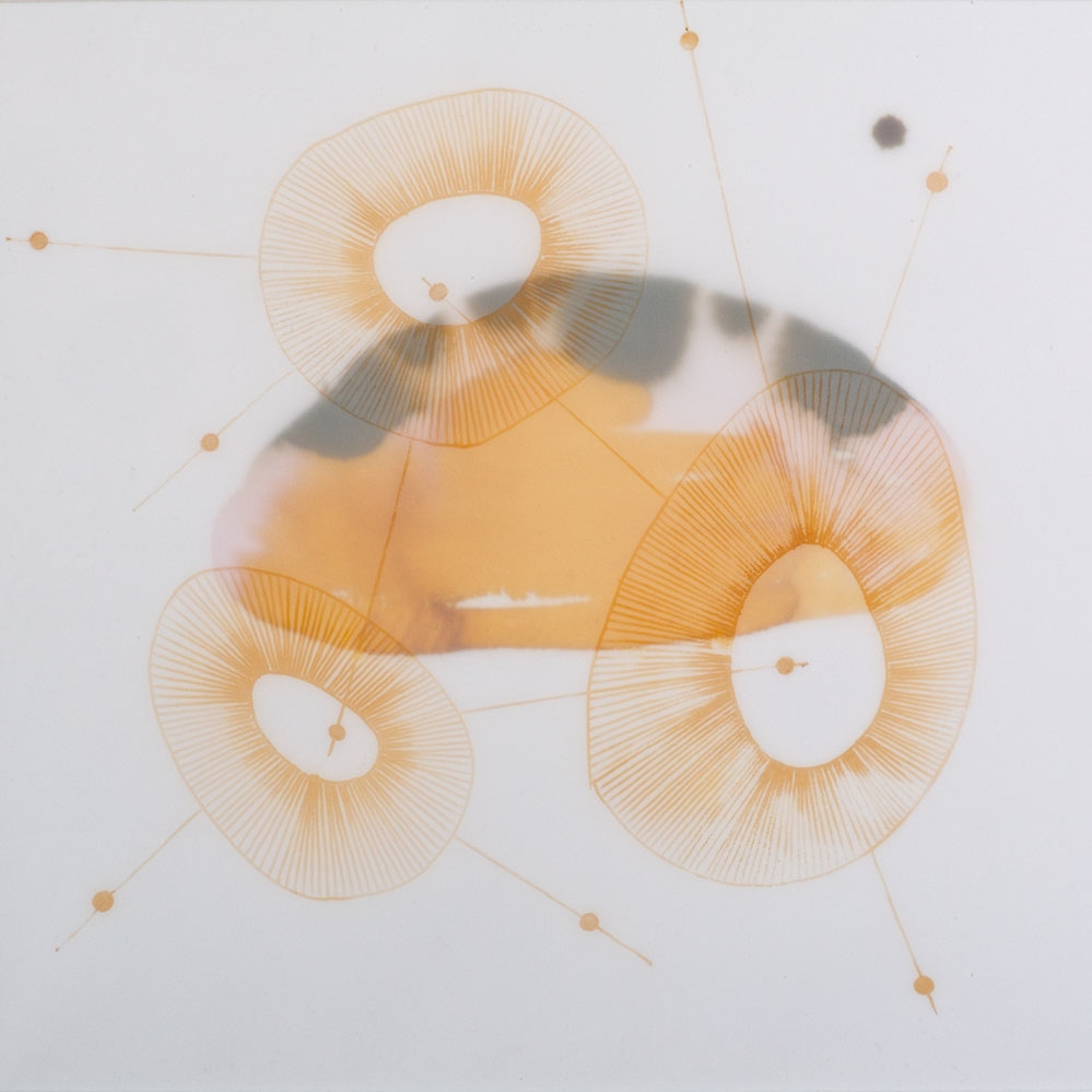 "Cluster Series by Terri Fidelak, 2013, ink on vellum and paper, 14""x15"""